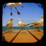 Seagull Photography Set of Four 5x5..